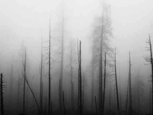 La carretera Cormac McCarthy apocalipsis bosque gris